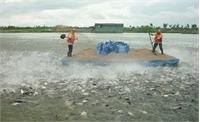 Xem xét khởi tố vụ giả giấy tờ kiểm định sản phẩm thủy sản
