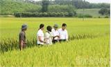 Hỗ trợ sản xuất vùng dân tộc thiểu số: Tránh dàn trải, lãng phí