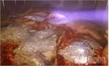 Phát hiện 500kg thịt lợn không có giấy tờ kiểm dịch