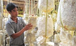 Anh Đồng Văn Hiệp-chủ trang trại nấm tiêu biểu