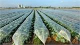 Phấn đấu gieo trồng 25 nghìn ha cây vụ đông