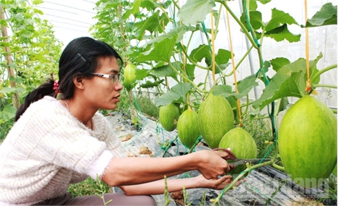 """Từ sản xuất đến sử dụng thực phẩm an toàn: Vẫn khó """"sâu rễ, bền gốc"""" - Kỳ 2: Tìm tiếng nói chung"""