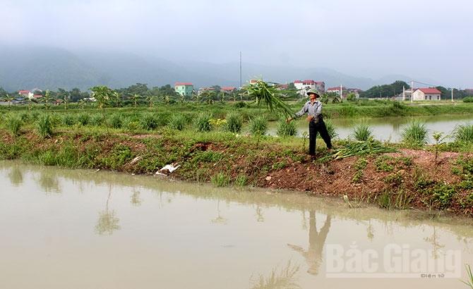 Nuôi trồng thủy sản, nuôi cá, xã Xuân Phú