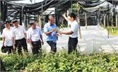Nhân rộng mô hình mới, cách làm hay trong sản xuất nông nghiệp