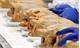 3 mẫu thịt gà nhiễm vi khuẩn salmonella