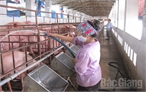 Toàn tỉnh Bắc Giang có 662 trang trại