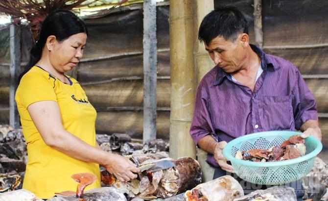 Sơn Động phát triển nghề trồng nấm