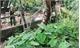 Xử lý dứt điểm việc lấp rãnh thoát nước tại khu Lê Lợi, thị trấn Chũ