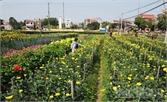 Việt Yên: Ứng dụng tiến bộ kỹ thuật,  nâng giá trị nông sản