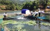 Cá lồng hồ Cấm Sơn