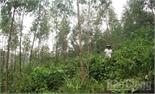 Công ty Đông Bắc phải có trách nhiệm với người mua rừng