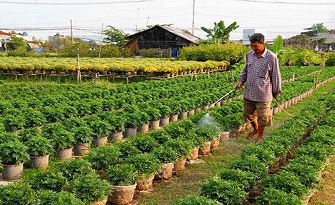 Bắc Giang, trồng 800 ha, hoa tết, cây vụ đông