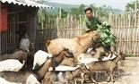Người đầu tiên nuôi dê ở Khuôn Lang