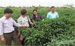 Phong trào nông dân sản xuất, kinh doanh giỏi: Tạo cú hích thoát nghèo