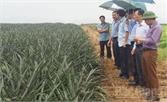 Lục Ngạn hợp tác sản xuất, chế biến, tiêu thụ  nông sản với Công ty Đồng Giao ( Ninh Bình)