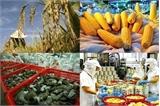 Phát triển sản xuất theo chuỗi góp phần cung ứng nông sản an toàn