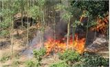 Tăng cường phòng cháy, chữa cháy rừng khu vực núi Nham Biền