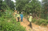 Chủ rừng thành lập và quản lý lực lượng bảo vệ rừng chuyên trách