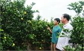 Lục Ngạn - bốn mùa cây trái