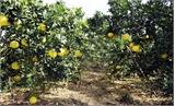 Ngày 25-11, khai mạc  Ngày hội trái cây Lục Ngạn