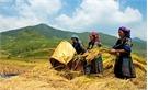 Hỗ trợ phát triển KT-XH vùng dân tộc thiểu số, miền núi