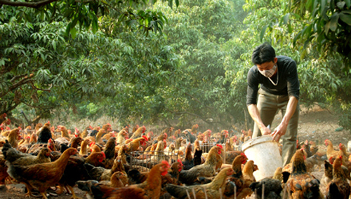 Bac Giang home to 662 standard farms