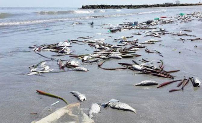 Cuối năm, 2016, hoàn thành, bồi thường, thiệt hại, sự cố, môi trường biển
