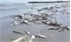 Hoàn thành bồi thường thiệt hại do sự cố môi trường biển cuối năm 2016