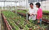 Ứng dụng chế phẩm sinh học: Nông nghiệp xanh, nông sản sạch