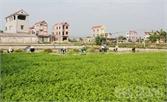 Dự án phát triển sản xuất nông nghiệp tại Hiệp Hòa: Giúp nông dân tăng thu nhập