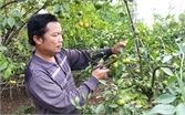 Vui hội trái cây Lục Ngạn