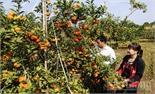 Mở rộng đầu ra cho trái cây Bắc Giang