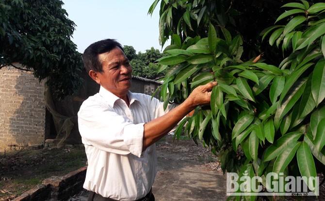 Sử dụng, bã thải, chất thải lỏng,  hầm Biogas, phân bón, cây trồng, xã Phúc Hoà, huyện Tân Yên.
