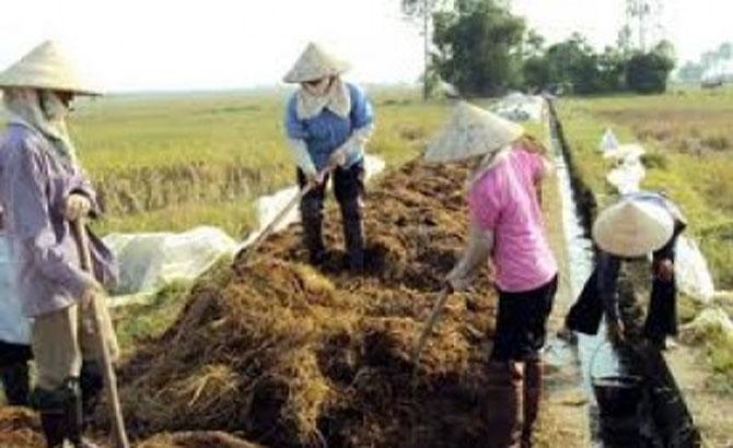 tổ chức, lớp tập huấn, ủ phân compost, phụ phẩm, chăn nuôi