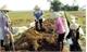Hướng dẫn gần 1  nghìn hộ dân cách ủ phân compost từ phụ phẩm chăn nuôi