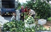 Hôm nay (25-11), khai hội  trái cây Lục Ngạn