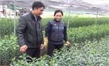 Cây trồng xanh tốt nhờ phân hữu cơ vi sinh