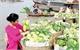"""Đầu tư Dự án """"Mục tiêu xã hội trong tăng trưởng xanh bền vững ở Việt Nam"""""""