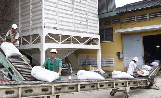 Doanh nghiệp, đầu mối, xuất khẩu gạo, vùng nguyên liệu