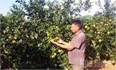 Đất cằn cho trái ngọt