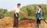 Ủ rơm rạ thành phân hữu cơ: Tiết kiệm chi phí, giữ sạch môi trường