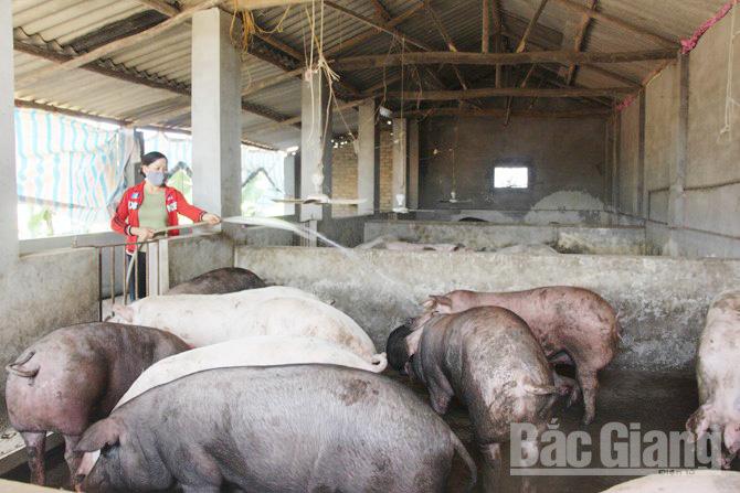Hầm khí biogas, giảm sức lao động, thời gian, phụ nữ, trẻ em