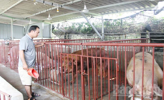 Mô hình, chăn nuôi, hiệu quả, xã Quảng Minh