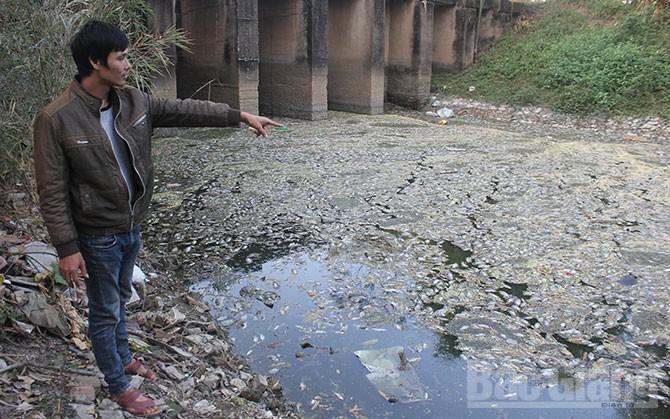 Khổ vì ngòi Bún ô nhiễm