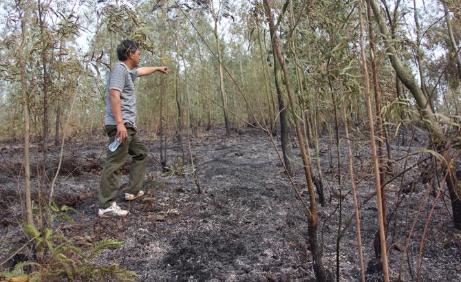 Cháy rừng ở xã Tiền Phong (Yên Dũng)
