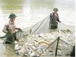 Vui sao cá nặng, lưới đầy