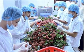 Xuất khẩu trái cây: Tạo đà bứt phá từ bước chuyển ban đầu