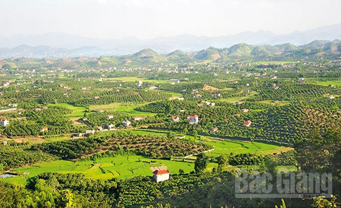 Bac Giang promotes fruit-tree development