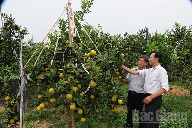 Bac Giang, fruit-tree, development