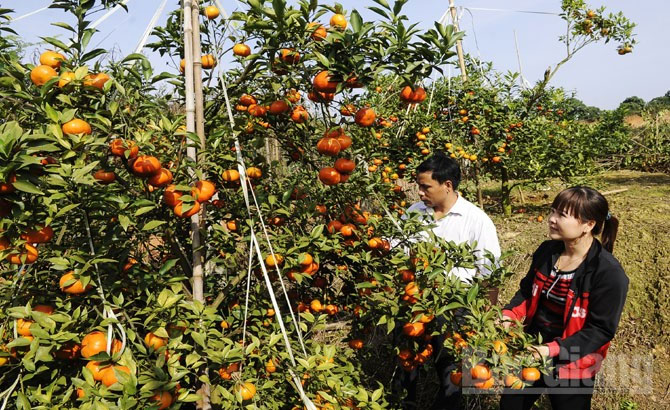 Bac Giang prioritises expanding fruit markets